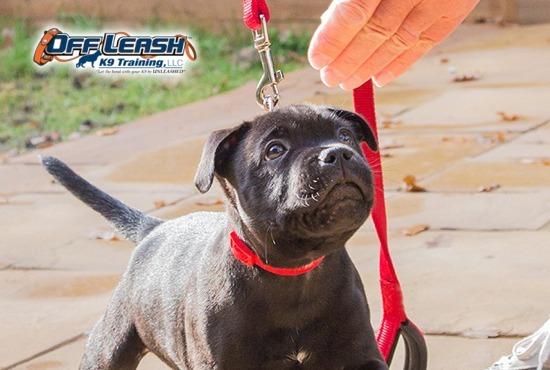Clarksville Puppy Training